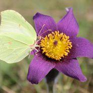 Inventaire botanique du CBNBL : saisie en ligne. Un lien utile !