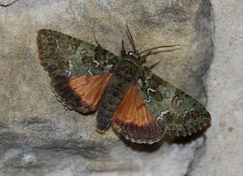 polyphaenis-sericata-bethisy-avec-xavier-105-jpg-bis-800x581