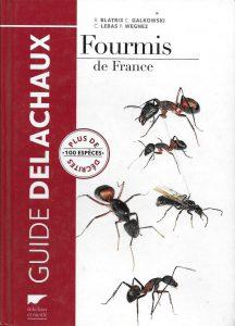 fourmis-de-france