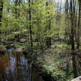 Nos milieux : l'Artoise : une rivière labellisée.