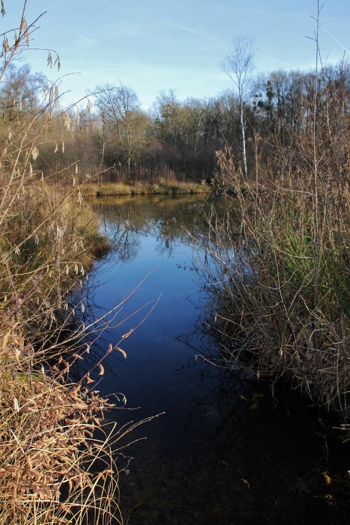 Nos Milieux : les marais de Bourneville (Oise 60)