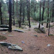 Richesse et utilité du cortège de fourmis en forêt d'Ermenonville