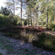 Protégé: Bois de Tillet : travail préparatoire