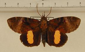 Papillons : un site spécialement dédié