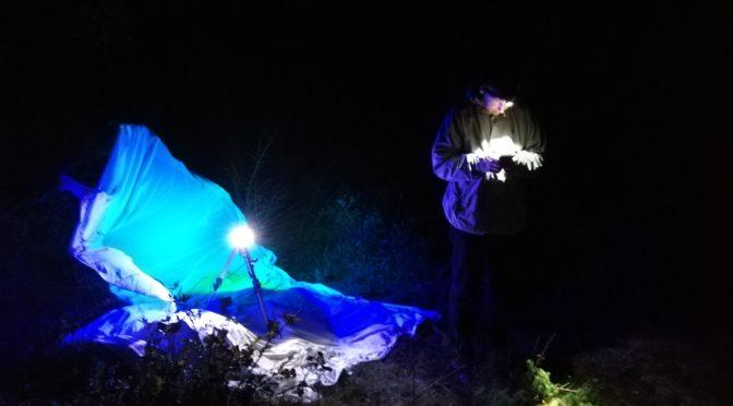 Bois de Tillet : Identification automnale des papillons nocturnes